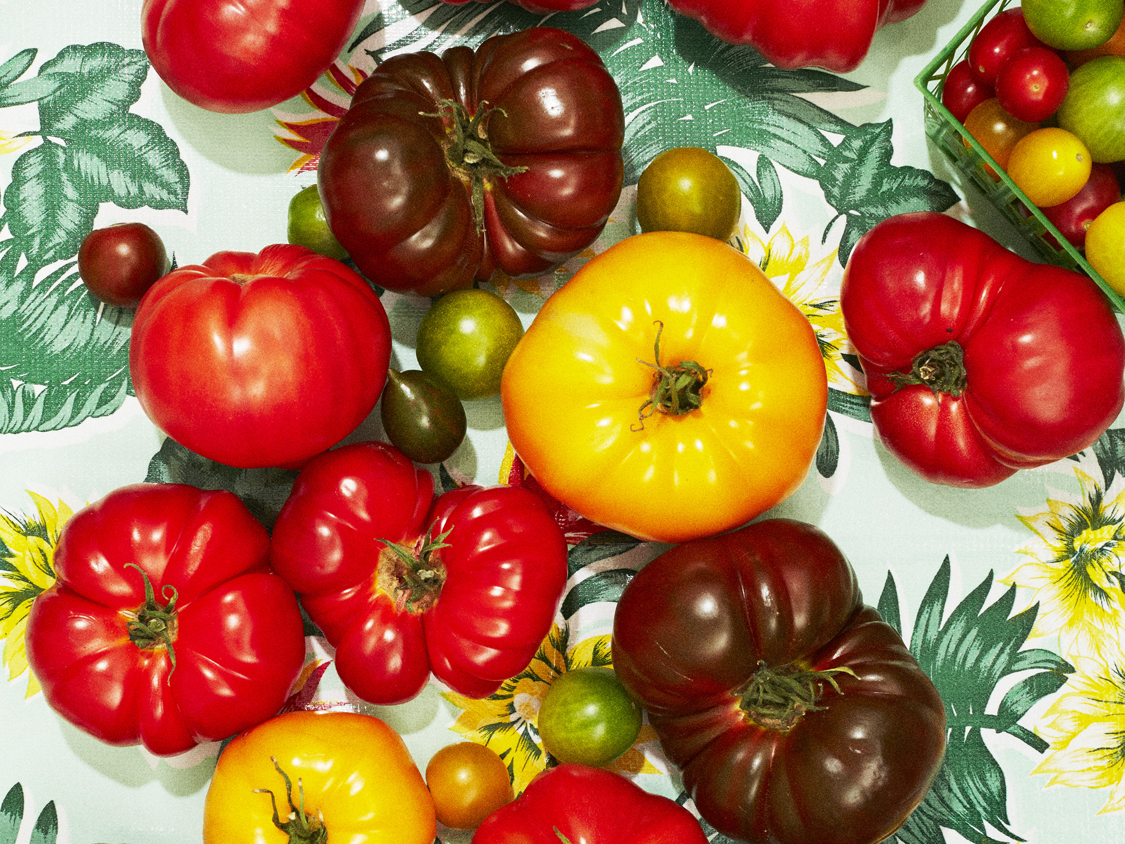 Local Tomatoes Really Are Healthier. Here's Why