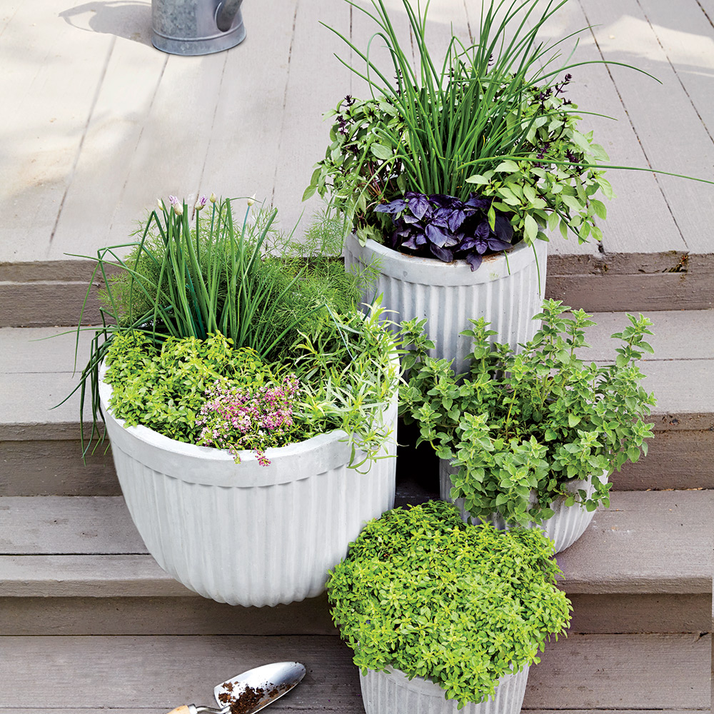 A few containers of fragrant leaves by the kitchen door create a scenic, flavorful stoop.