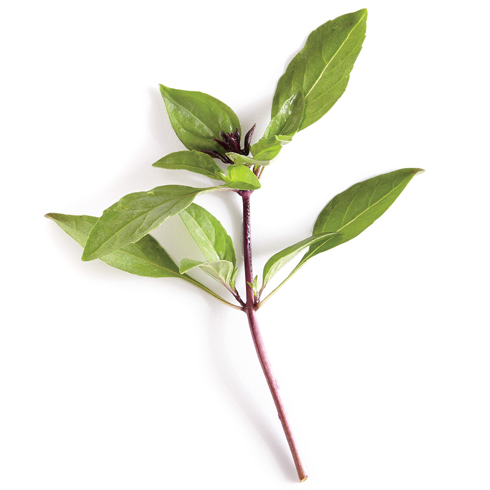 THAI SWEET Slender, smaller leaves yield a spicy anise flavor that goes well with Asian dishes. Quick to produce showy purple flowers, it's as ornamental as it is edible.