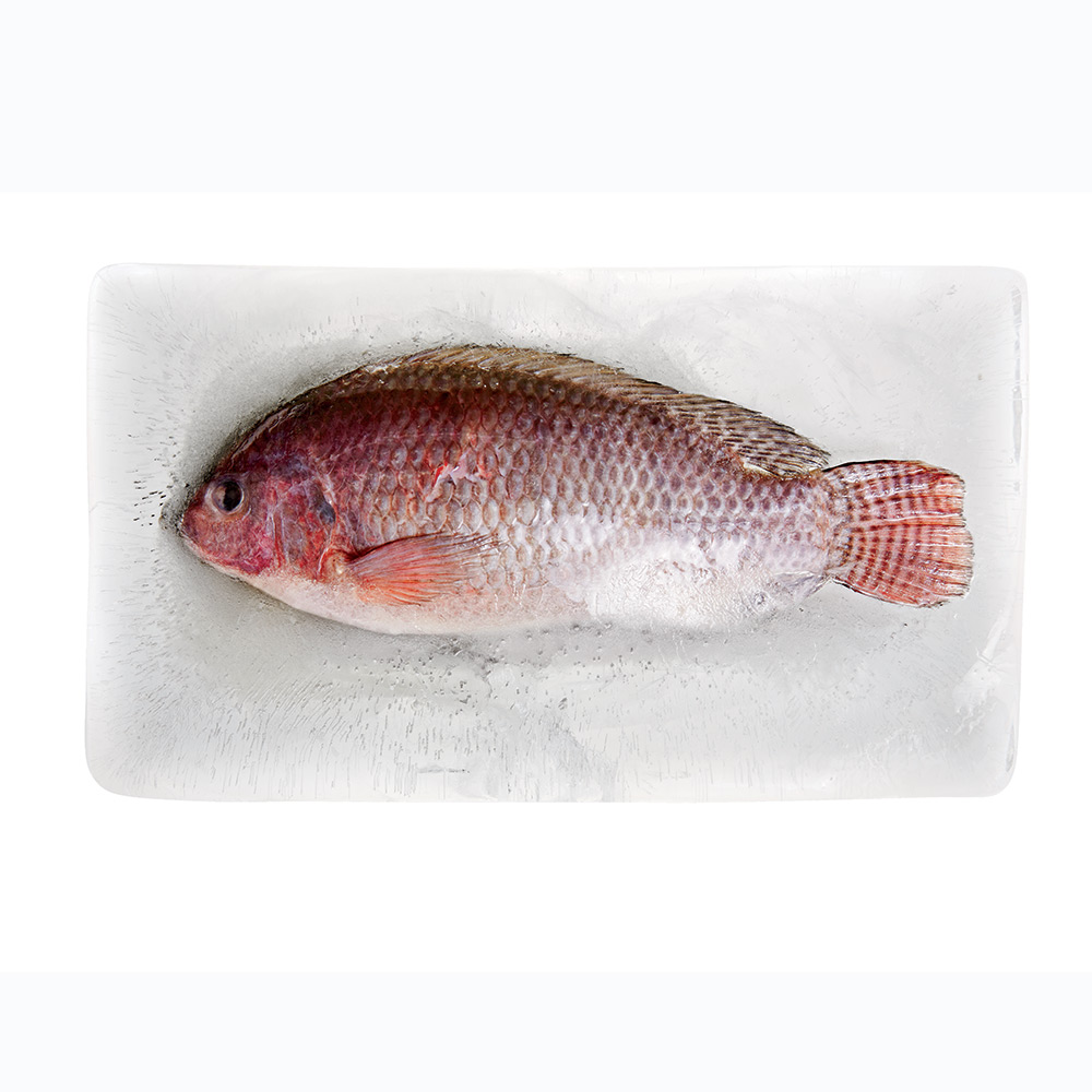 Should i buy frozen fish for Is tilapia fish good for you