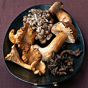 Fall Mushrooms Guide