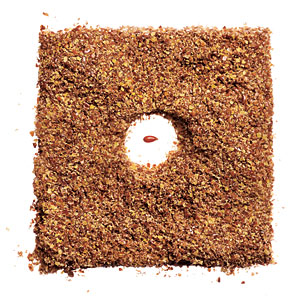Nutrition Mistake: You Use Whole Flaxseeds