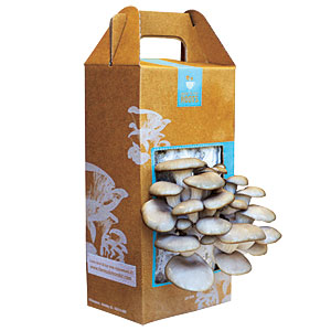 Back to the Roots Mushroom Garden Kit