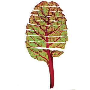 A Great Leaf: Swiss Chard