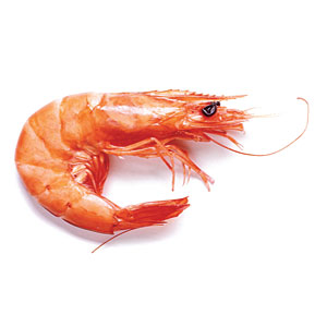 Why some shrimp are saltier than others.