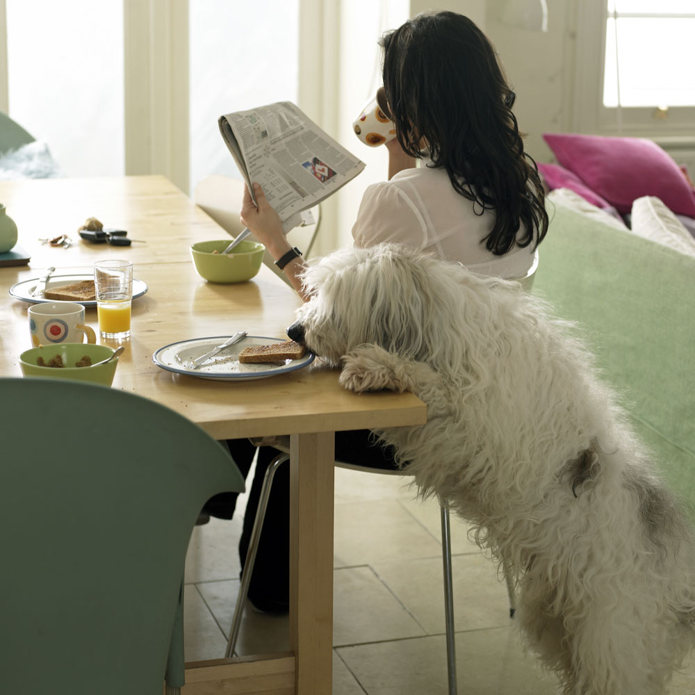 Eating Tables: 11 Foods That You Should Never Feed Your Pets