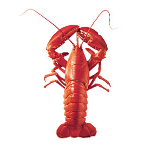 Lobster - 6 Common Saltwater Fish and Shellfish - Cooking Light
