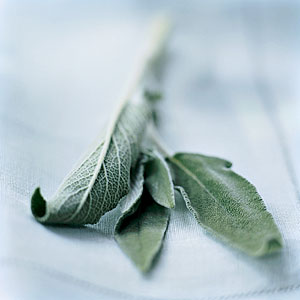 Fall Sage Guide