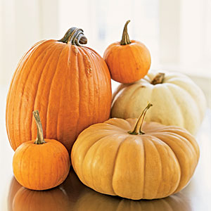 Fall Pumpkins Guide