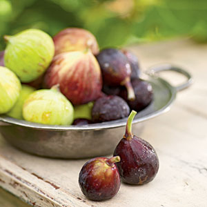 Fall Fig Guide