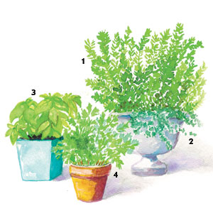 Containers: Herbs