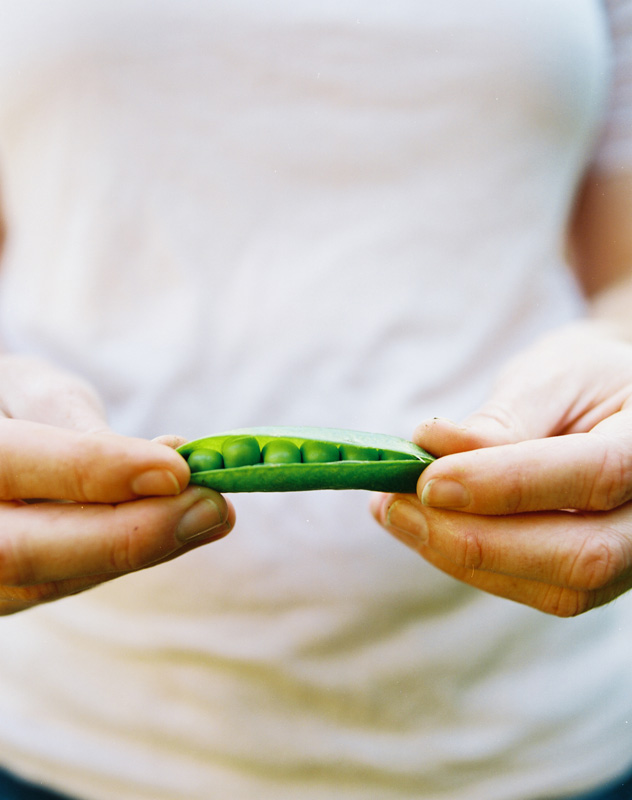 Freshly picked peas are the sweetest. Photo: Caleb Chancey