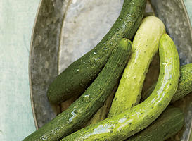 Our Favorite Cucumber Varieties