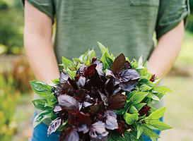 Our Favorite Basil Varieties