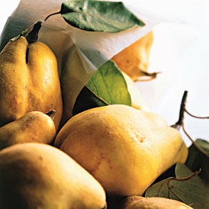 Fall Quince Guide