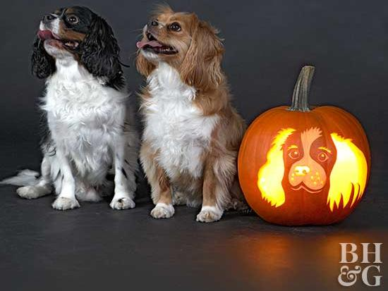 5 Tips for Keeping Your Pet Safe and Calm During Halloween