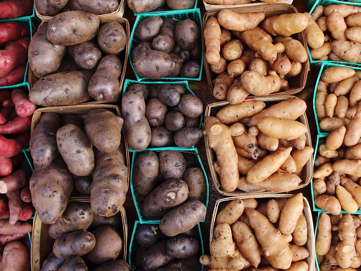 Potatoes 101: The Ultimate Guide to Everyone's Favorite Tuber