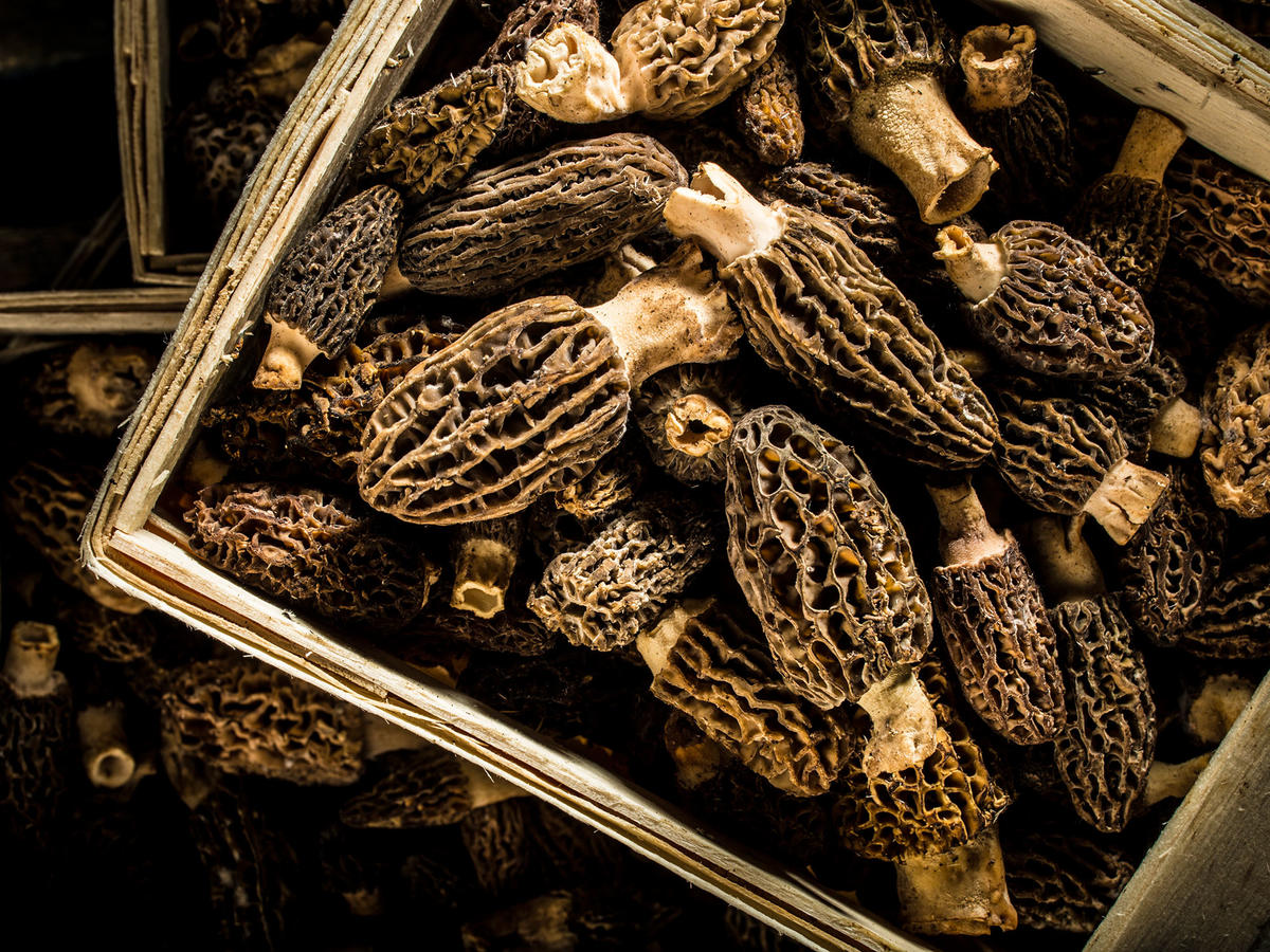 Morrel Mushrooms