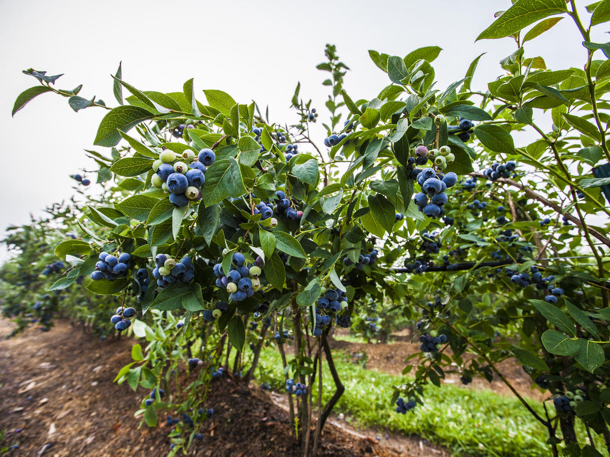 7 Fruits and Veggies to Plant in Your Spring Garden...Like, Yesterday