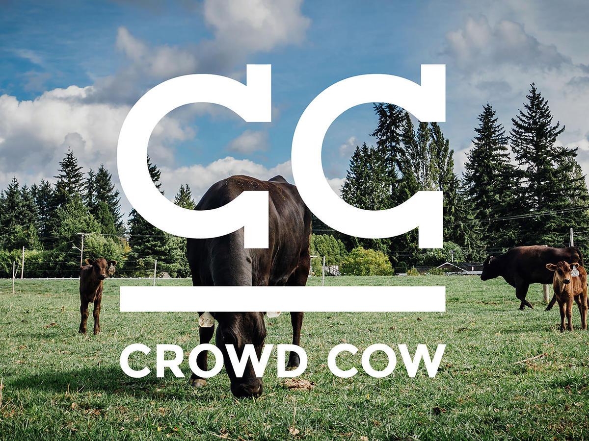 1805w Crowd Cow