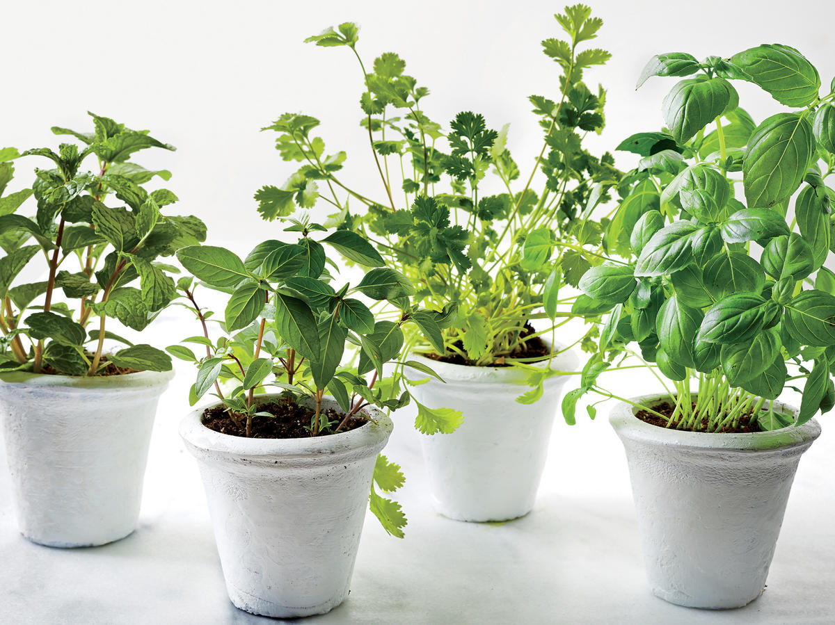 How to Keep Fresh Herbs in Your Kitchen—Plus 4 Ways to Prepare Them