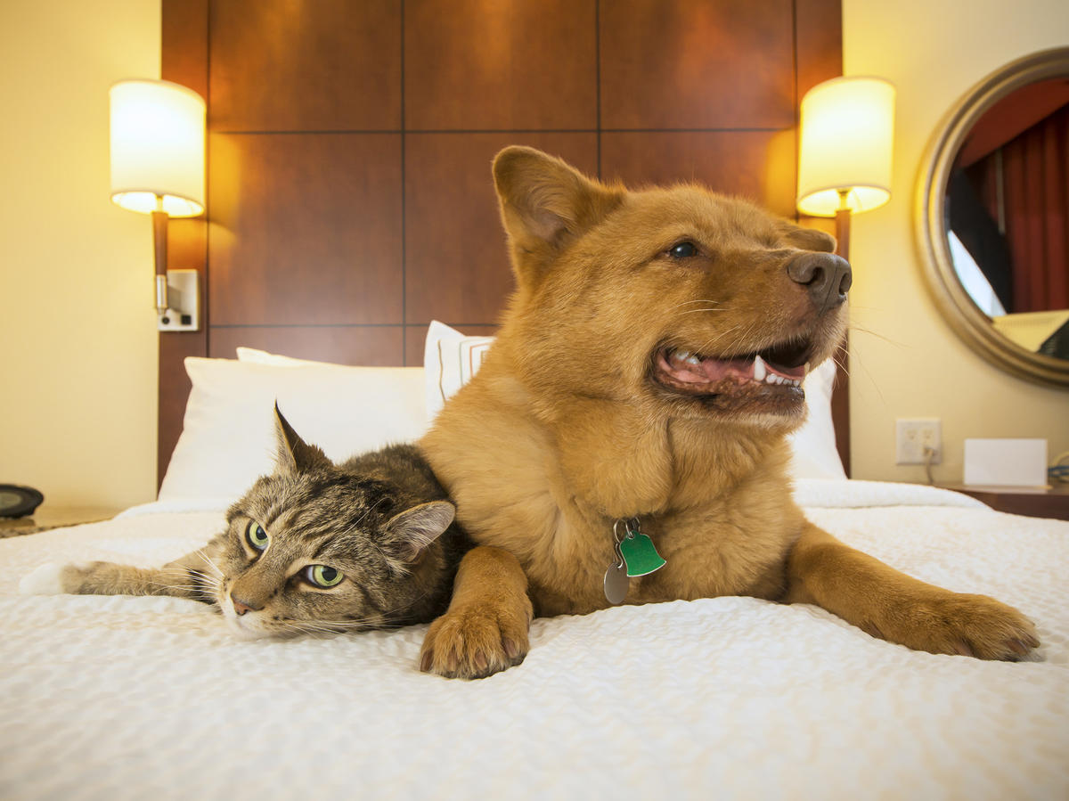 Here's How to Make Traveling With Pets Less Stressful—on You and on Them