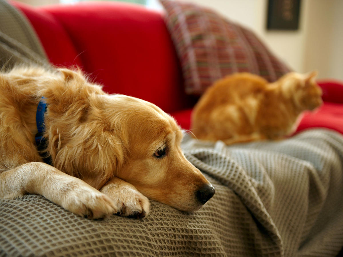 How to Help Anxious Pets Learn to Stay Home Alone