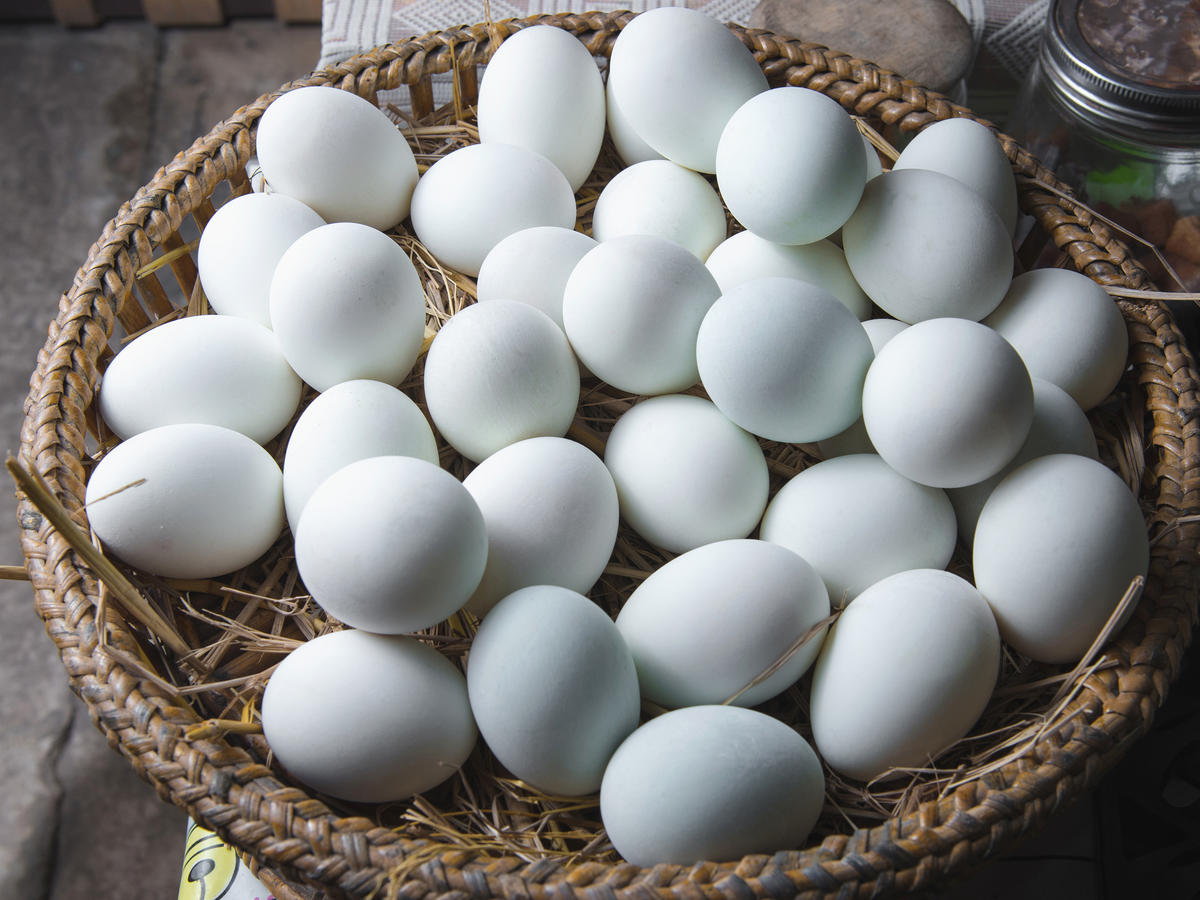 1809w Cage Free Eggs