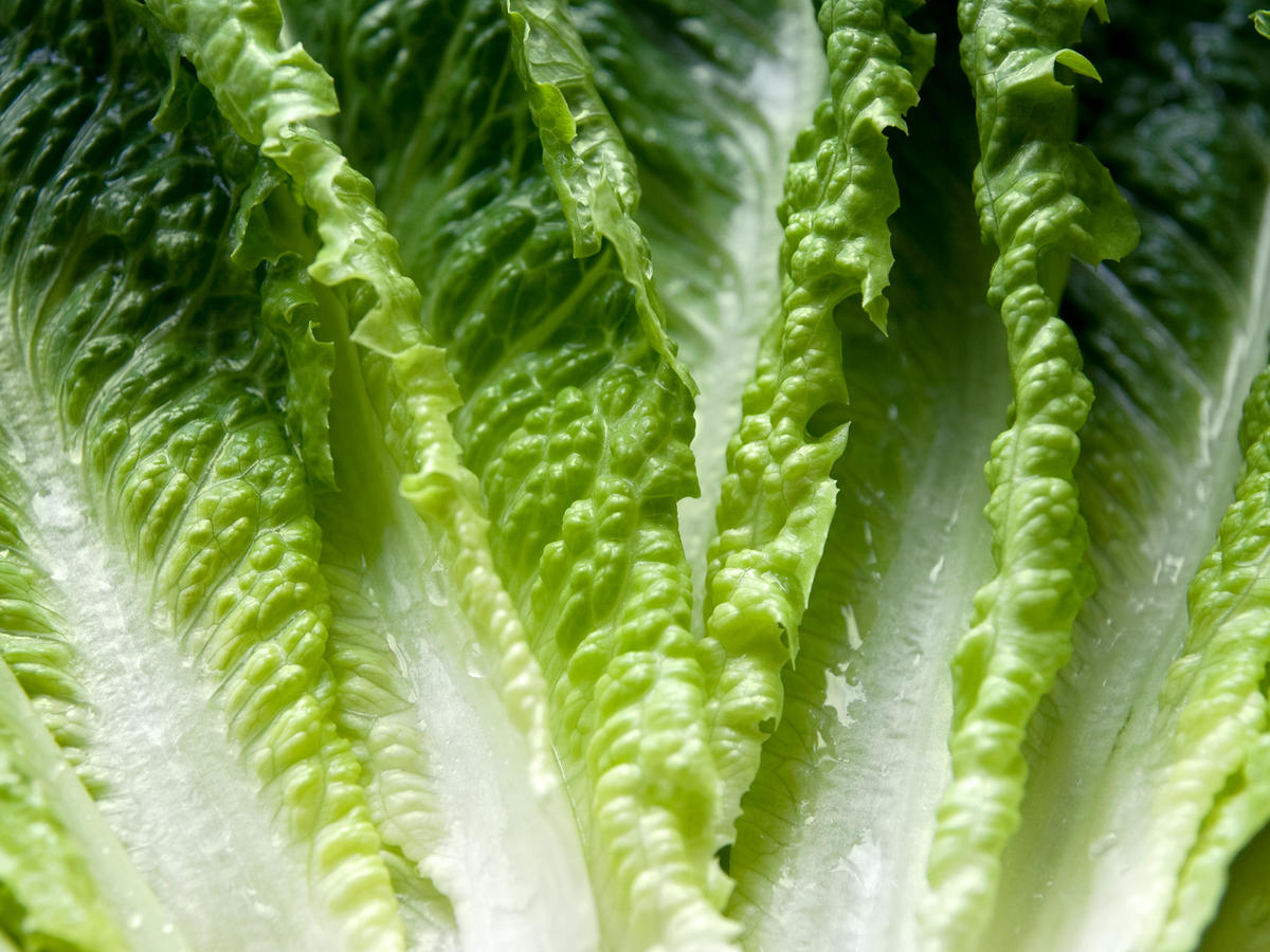 Romaine E. coli Update: FDA Pinpoints Source, Says Outbreak Isn't Over Yet