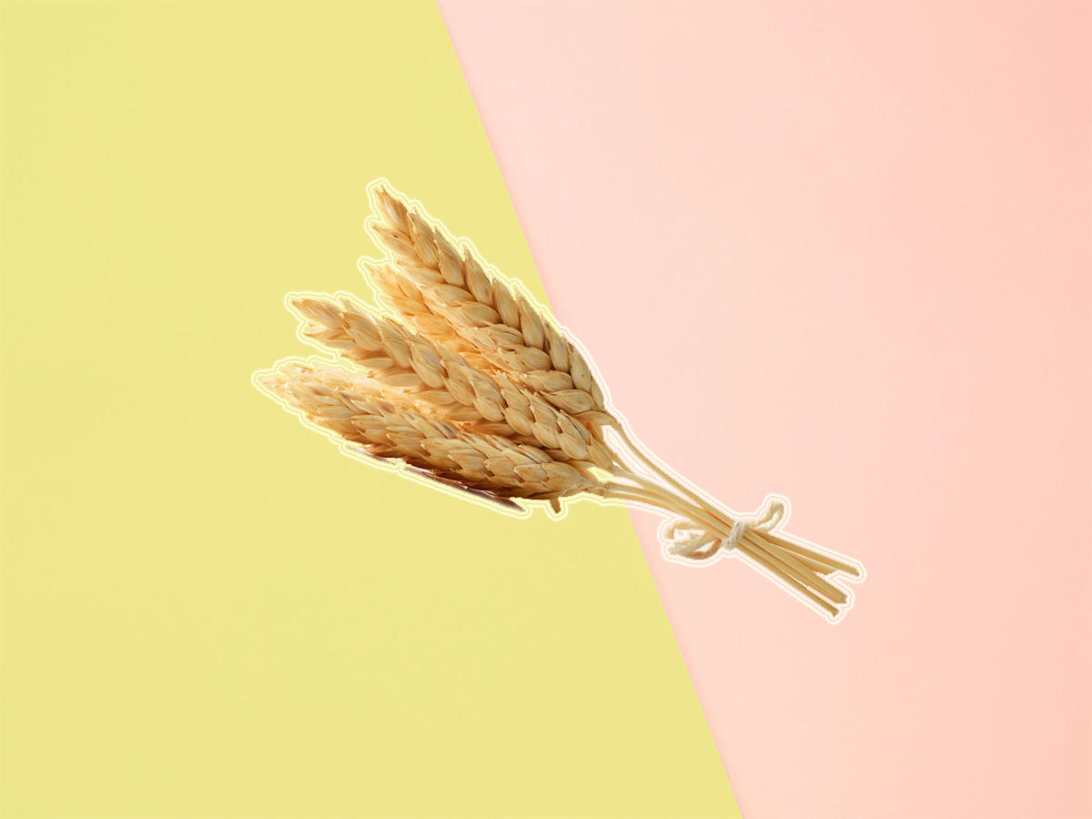 "Scientists Create New ""Gluten-Busting"" Wheat"