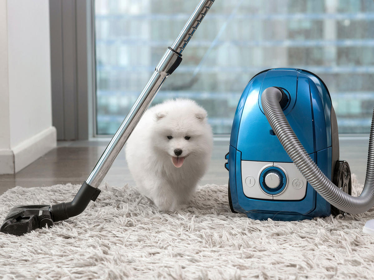 How to Keep Your Spring Cleaning Pet Safe