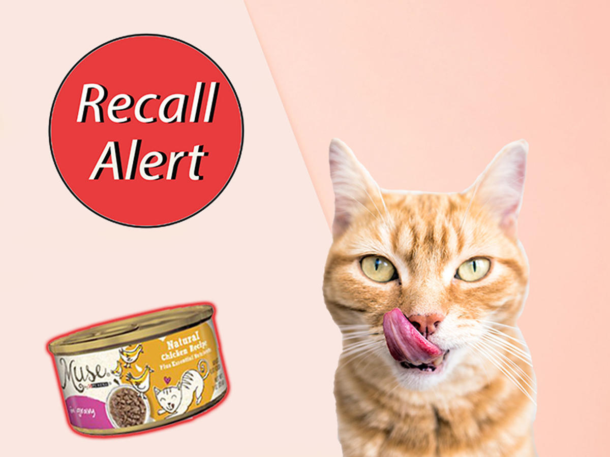 """Purina Issues Recall After """"Rubber Choking Hazards"""" Reportedly Found in Cat Food"""