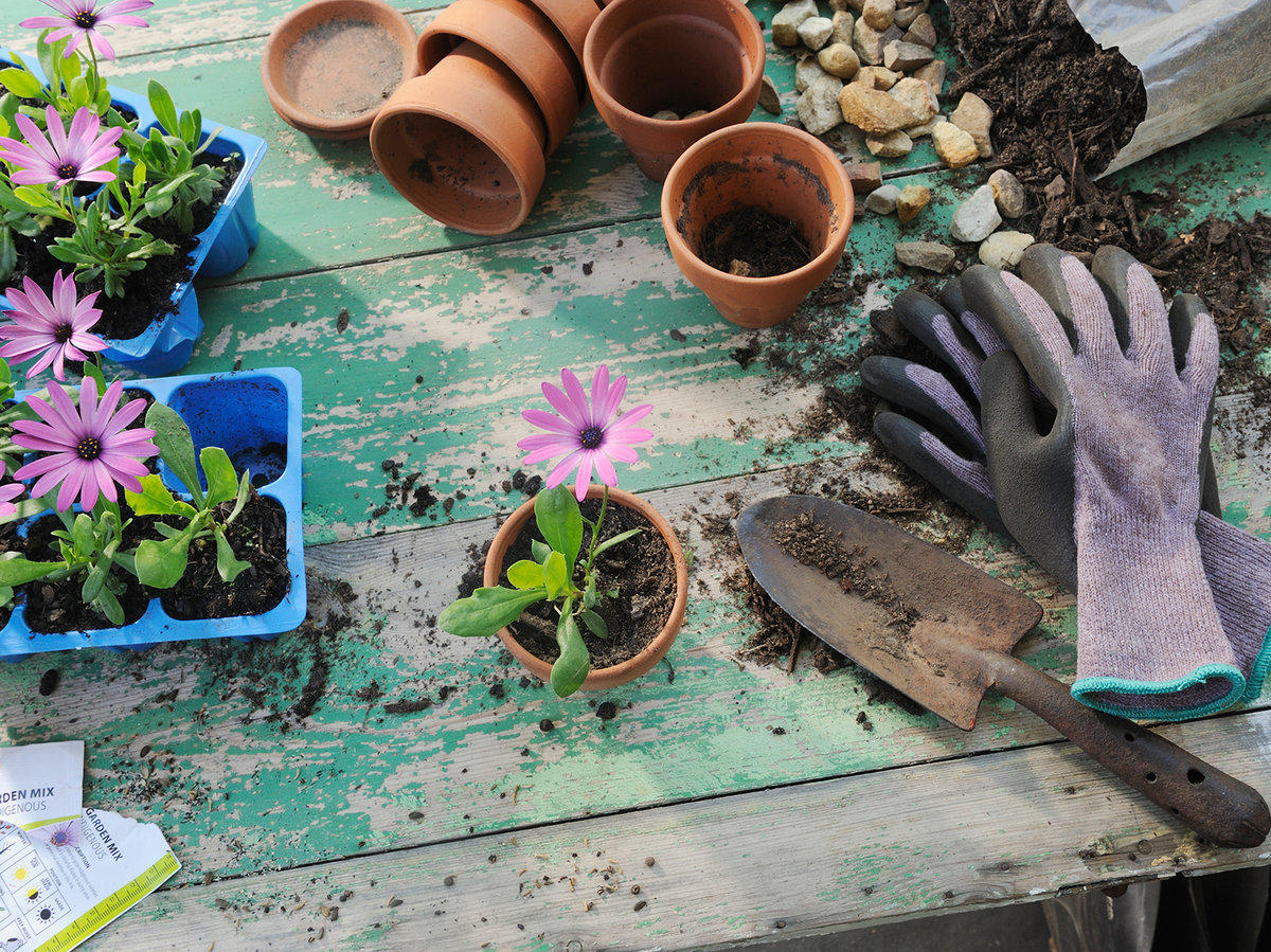 A New Study Says Gardening Is Just as Good as Going to the Gym