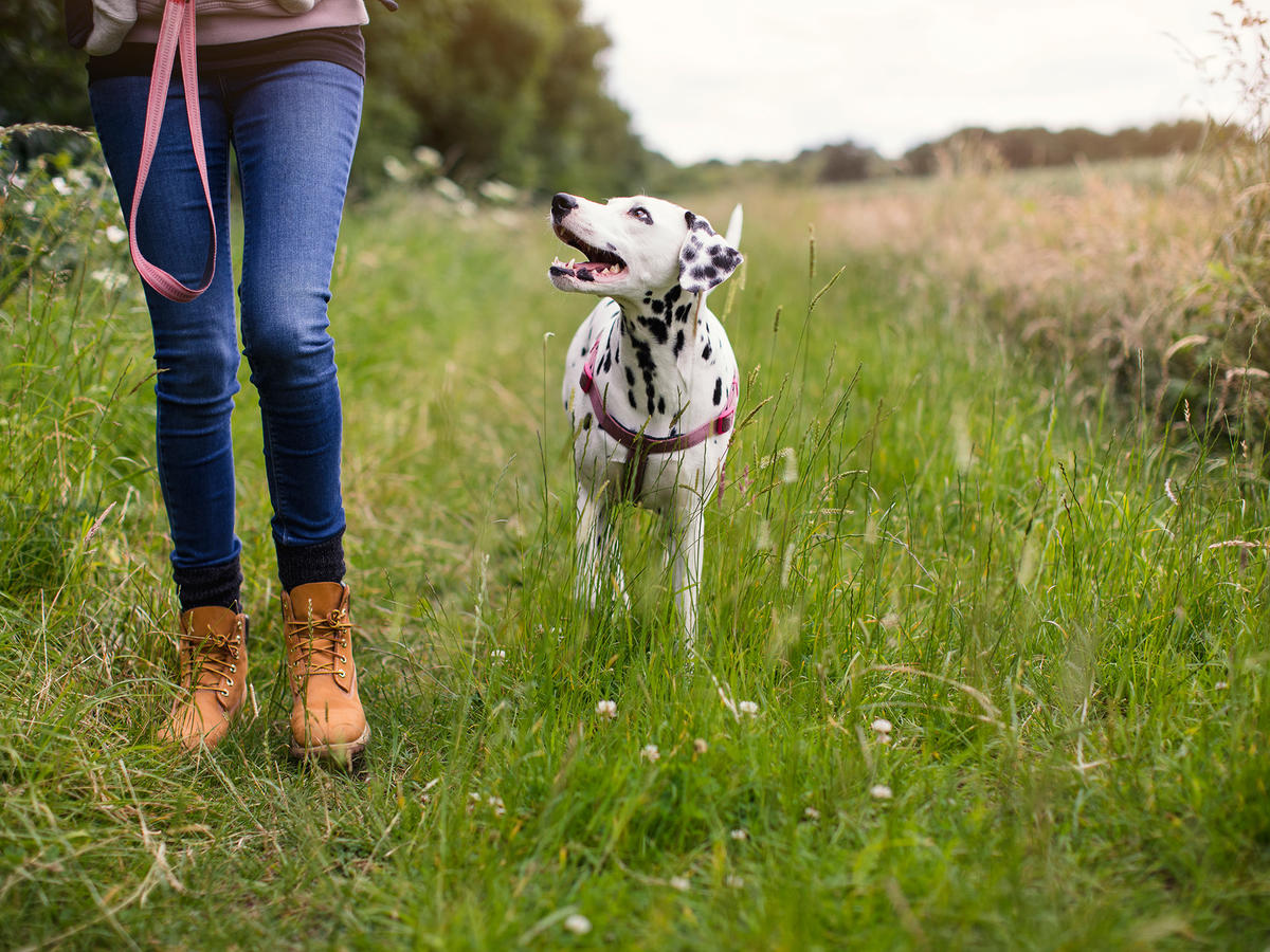 The Surprising Health Benefits Associated With Walking Your Dog Each Day