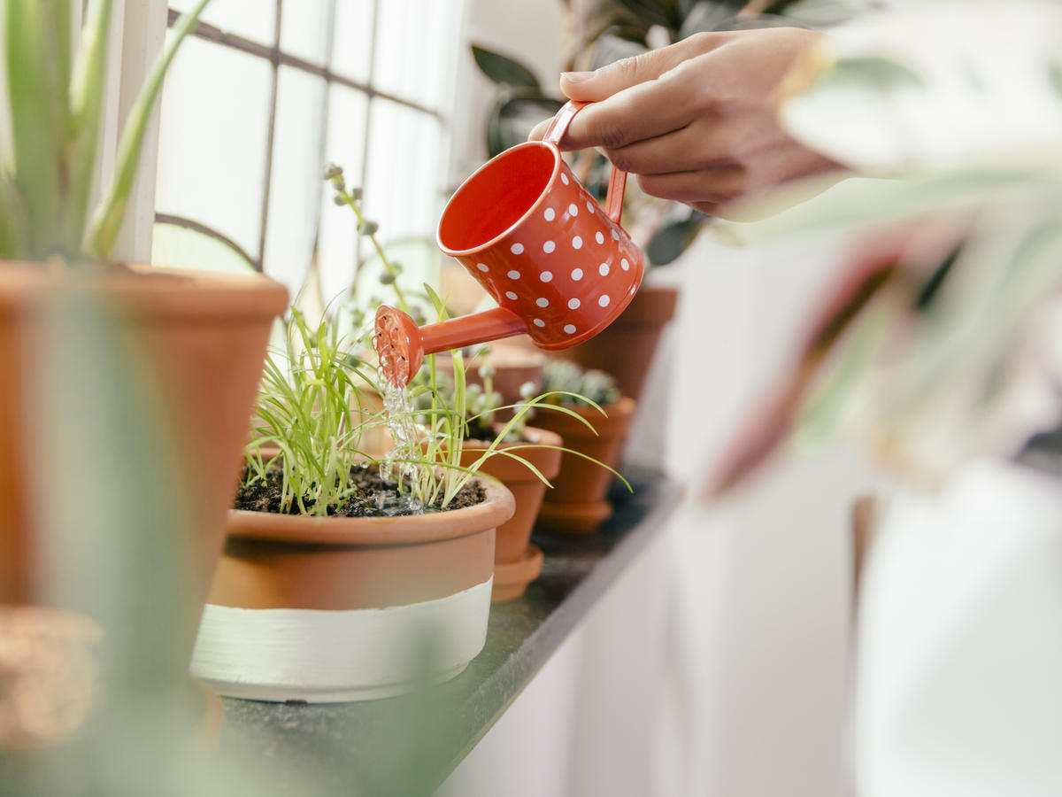 Keeping Your Plants Alive Just Got a Whole Lot Easier With This Genius App