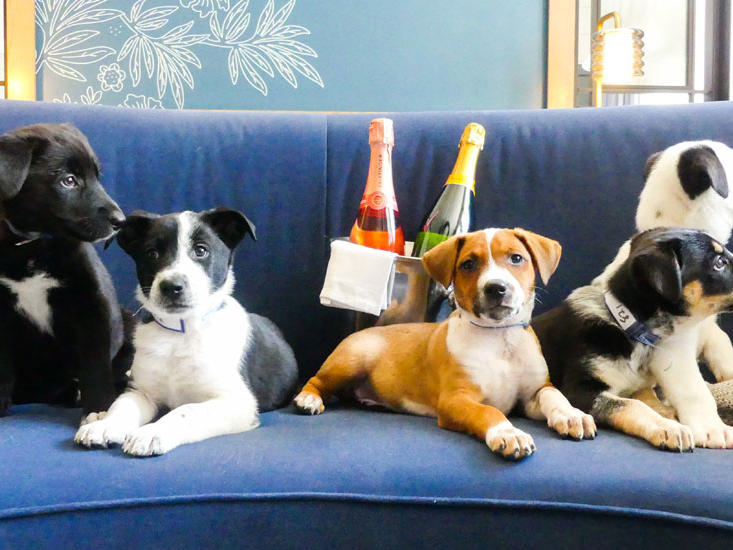 You Can Now Order Puppies and Prosecco to Your Room at This Hotel Because Life Is a Celebration