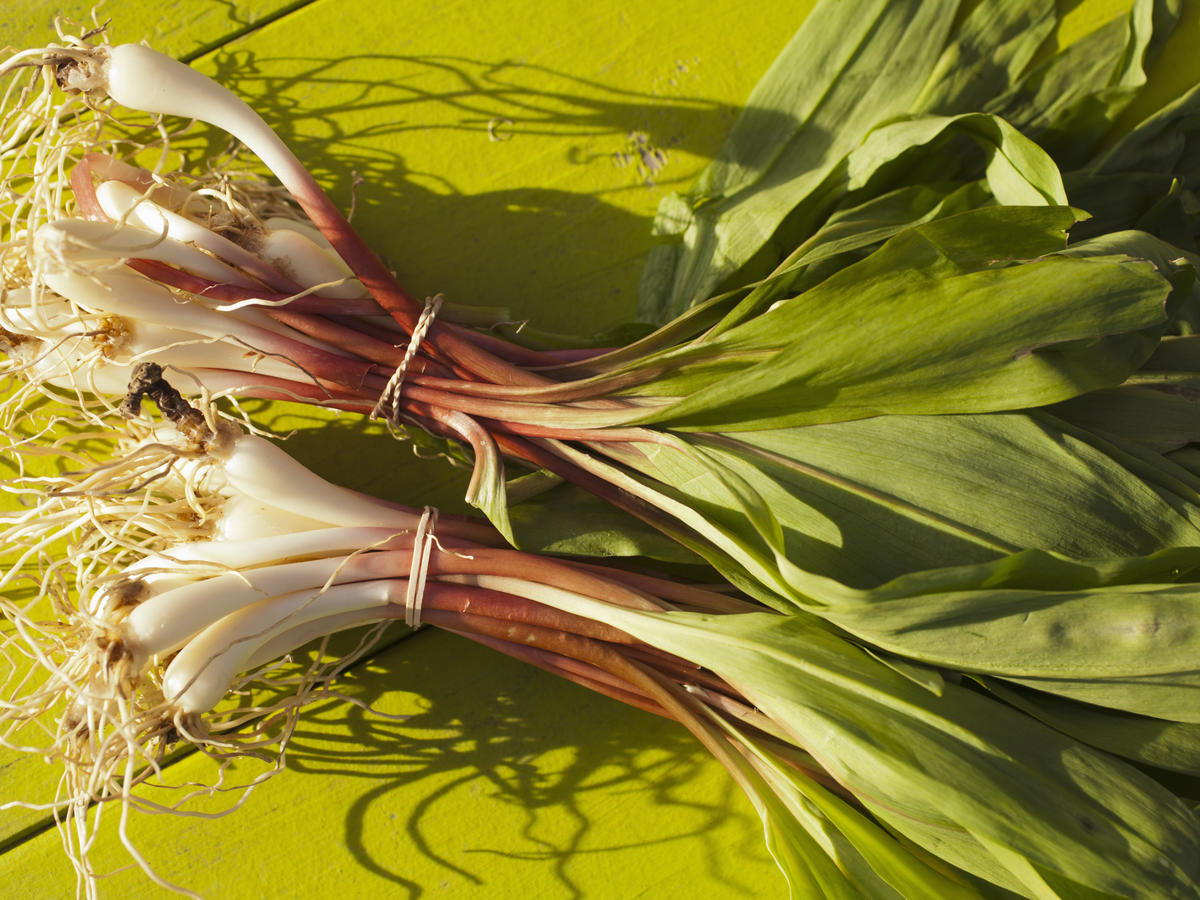 What Are Ramps and Why Is Everyone Obsessed With Them?