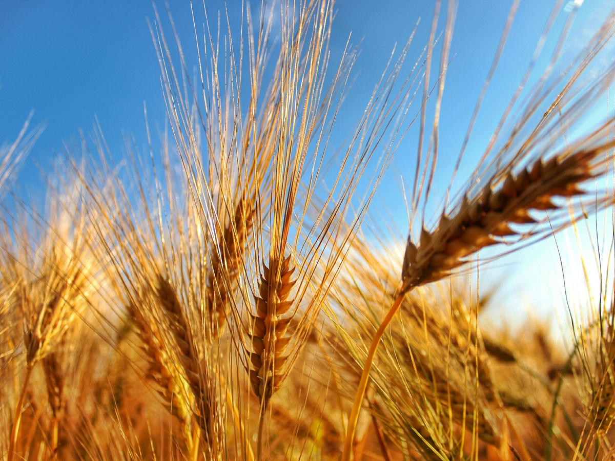 14 Things You Need to Know About Celiac Disease