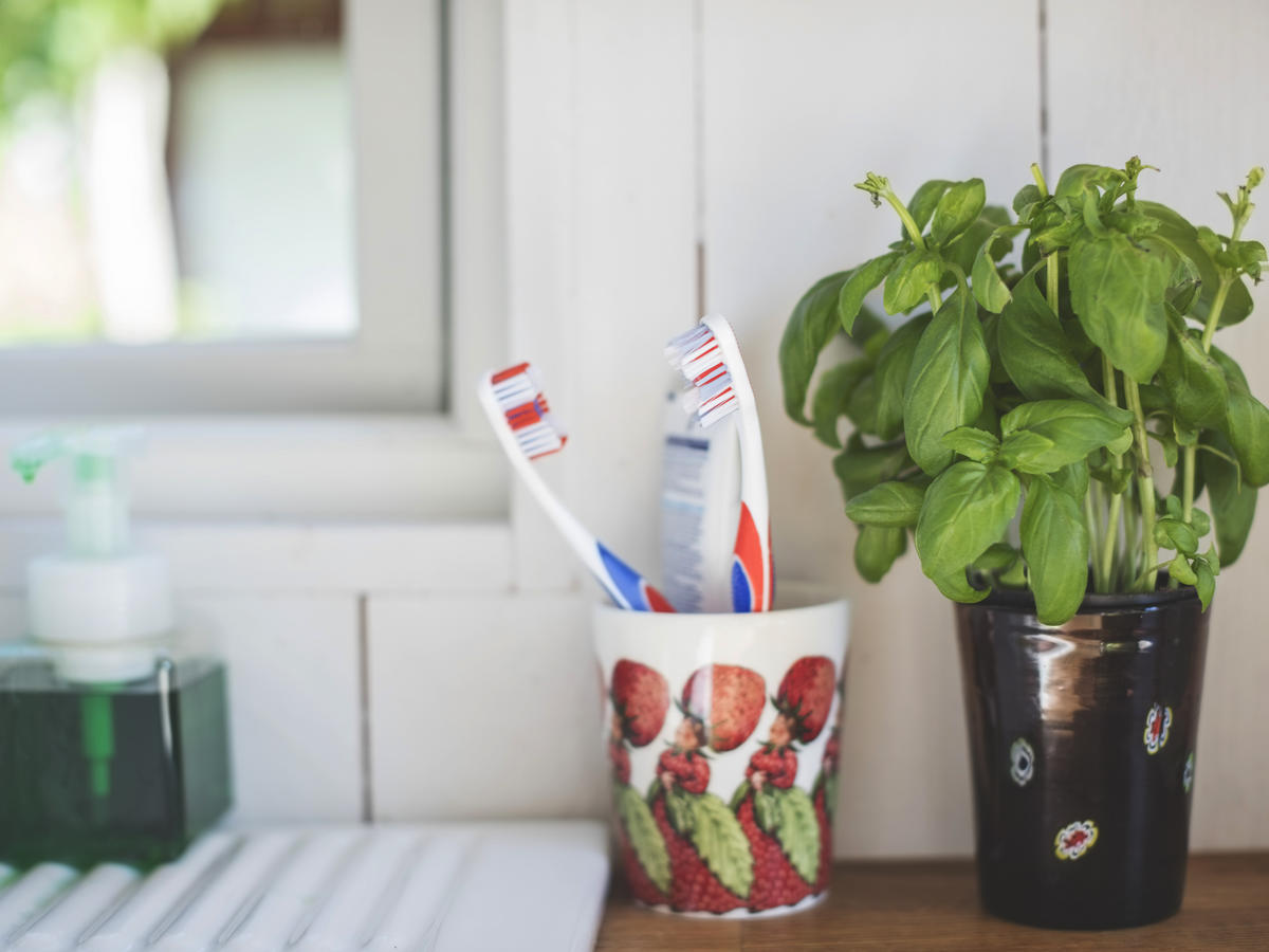 I Grow Herbs in My Bathroom and You Should Too