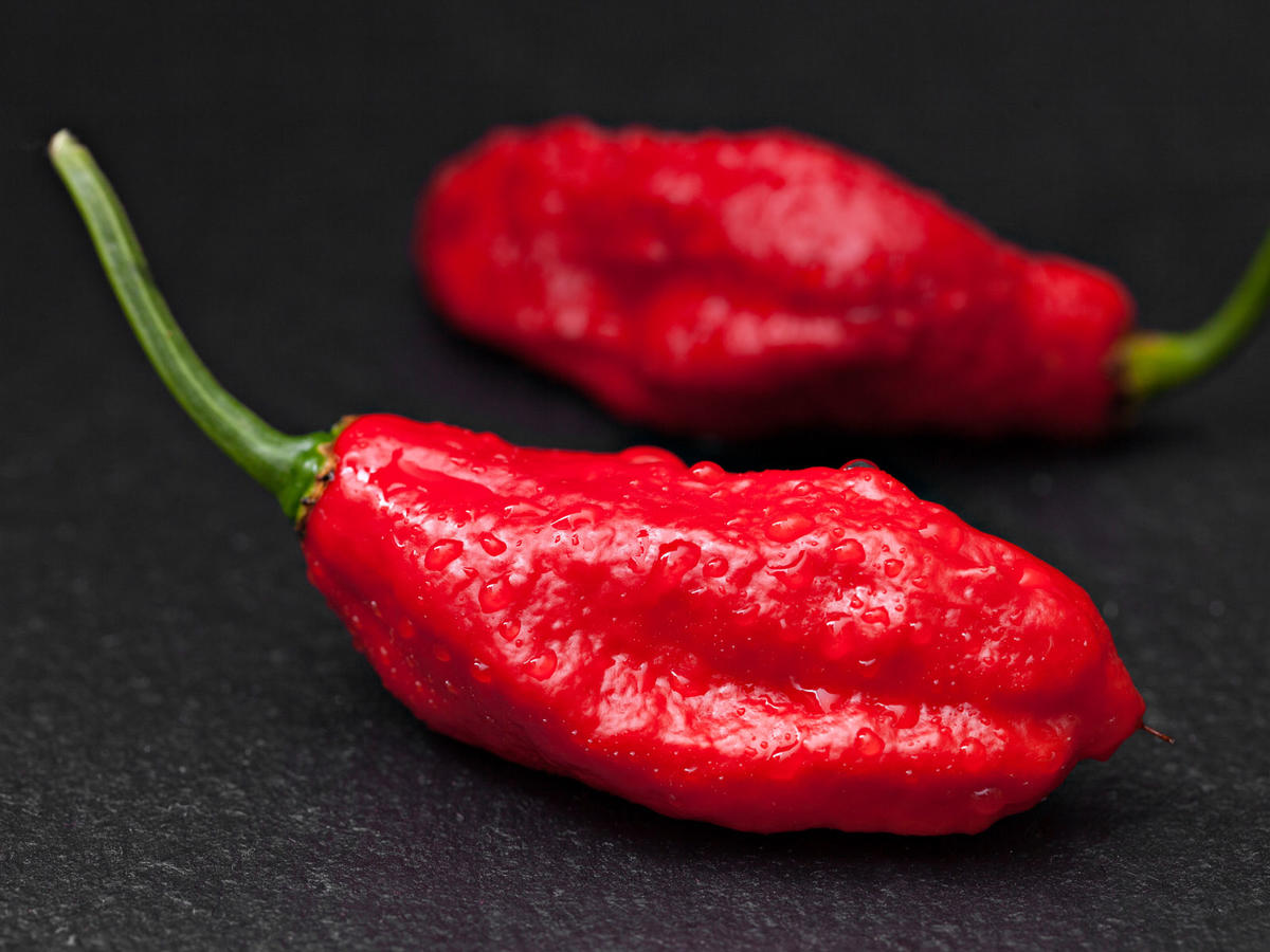 Merriam-Webster Adds 'Ghost Pepper,' 'Umami,' 'Mofongo' and More Food Words to the Dictionary