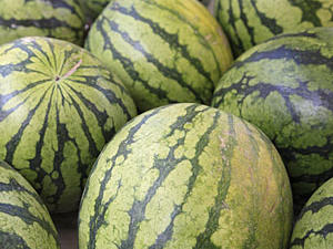Want to choose the best? Look for a symmetrical melon heavy for its size and free of blemishes or soft spots. Roll it around and check for the couche (the spot where it rested on the ground while growing). It should be readily identifiable. Don't see one? The melon's not yet mature. Last, find the spot where the stem was attached. Clean indentations should appear on melons that detached naturally from the vine, like watermelons.