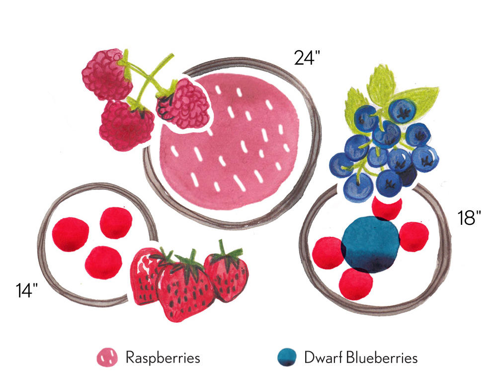 Potted: Fruit