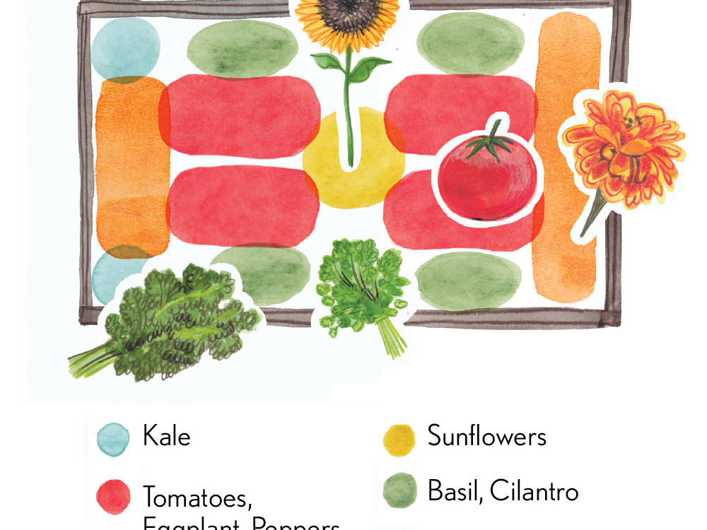 Raised Bed Design: Tomatoes