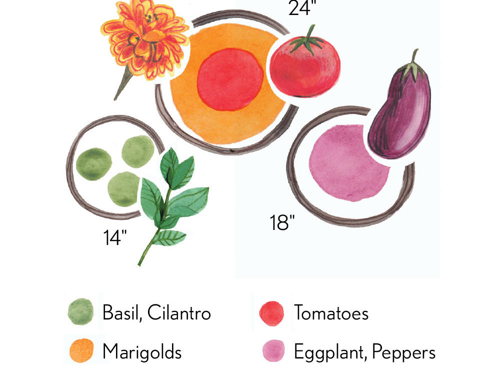 Container Designs: Tomatoes