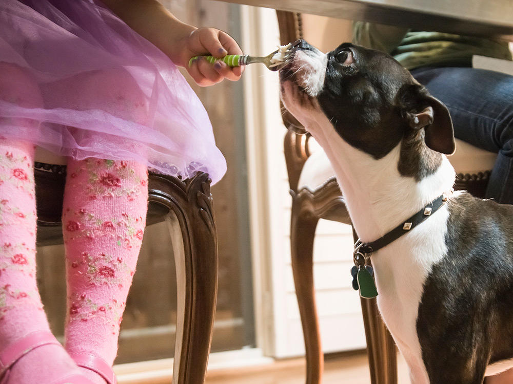 Dog eating under table