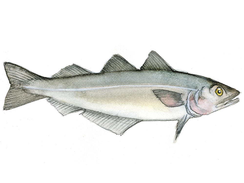 Atlantik Haddock Mail: 12 Fish You Should Try In 2015