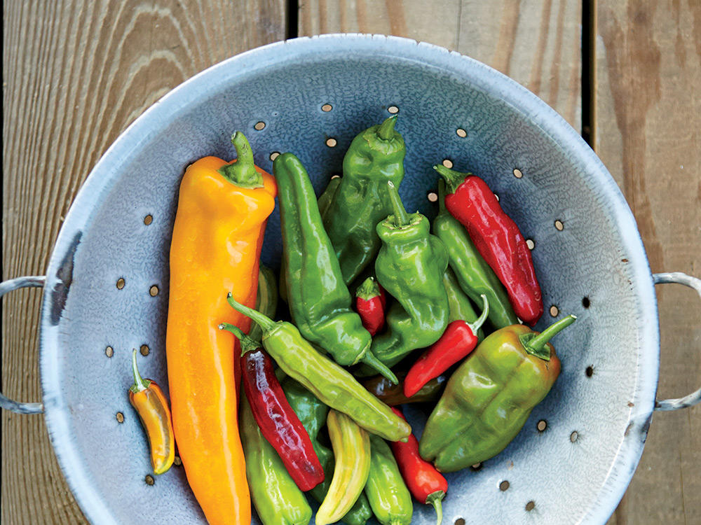 Hot Peppers Metabolism