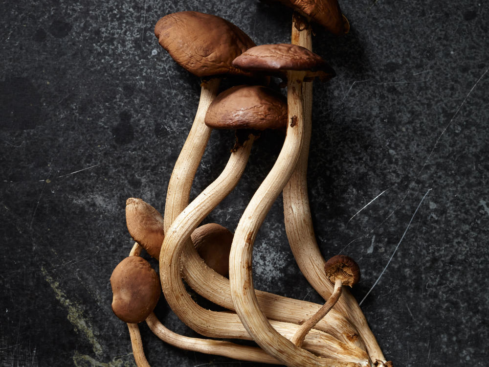 In Season: Mushrooms