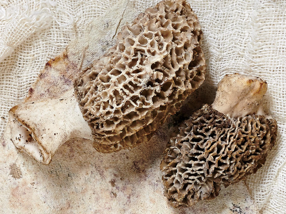 Spring Morel Mushrooms