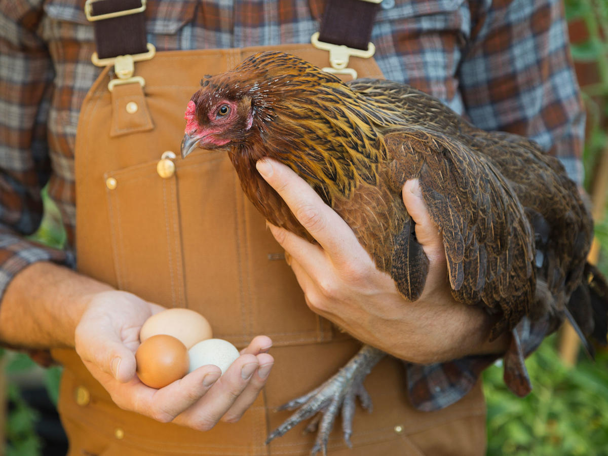 Farmer Holding Hen and Eggs